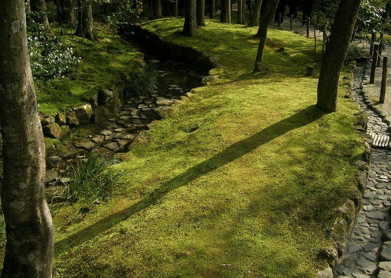 """Résultat de recherche d'images pour """"mousse dans les jardins"""""""